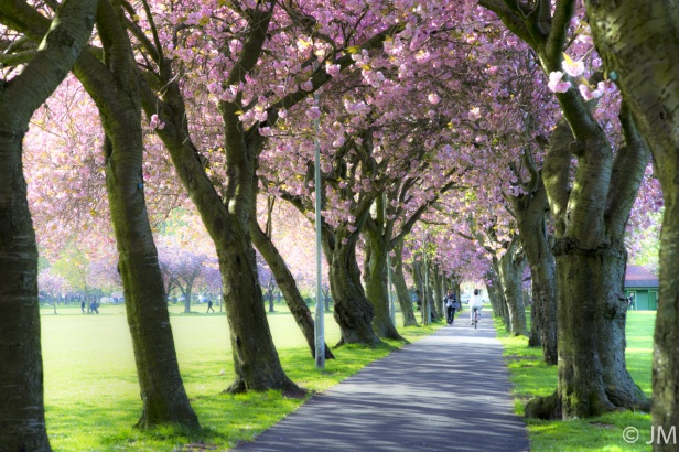 The meadows coronation walk flowers